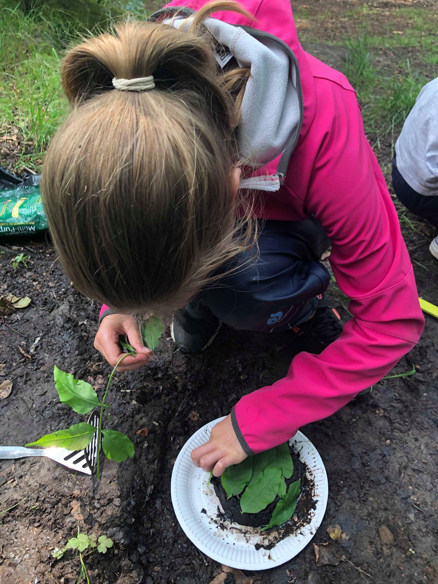 OSC - Leaf investigating